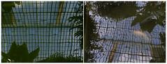 Aquarium   Golden fish — Equatorial greenhouse (michelle@c) Tags: springtime garden botanica greenhouse pond plant leave fish reflection sky glass roof serreéquatoriale lesserresdauteuil patrimoine dyptich parisxiv 2017 michellecourteau
