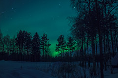 Aurora in Finnish Lapland (Rezwanul Islam (REZ1)) Tags: rovaniemi lapland finland fi aurora borealis spectacular display night sky green northern lights dark trees snow covered star starry landscape scandinavia chilly winter canon eos 600d beautiful magical artistic