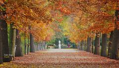 (520/17) Otoño en El Capricho (Pablo Arias) Tags: pabloarias photoshop photomatix nxd españa hojas árbol follaje parque otoño elcapricho madrid