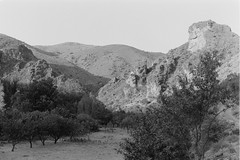Night approaches (davidgarciadorado) Tags: jalon zaragoza spain blackandwhite film ilford olympusom2 zuikoom evening trees ngc