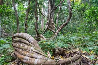 ramkhamhaeng national park - thailande 18