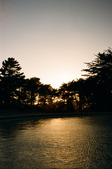 000036970013 (olkinn) Tags: film sunset sun color water waves ripple ripples contrast ca california cali light nikon n65 san francisco sf sanfrancisco nature natureandnothingelse trees tree yellow