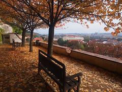 Garden under the castle - Prague (jmarnaud) Tags: czech prague 2016 family autumn florence castle garden tree colors
