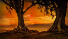 Together thru Eternity (JDS Fine Art Photography) Tags: sunset beach trees orange warmcolors warmth togetherness together nature bonding beauty naturesbeauty naturalbeauty inspirational landscape dramaticsky