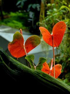 Flower or Leaf