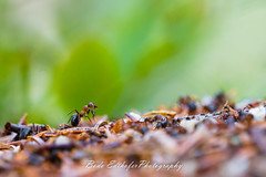 thats my home (bodoedthofer) Tags: ant nature wildlife sweden naturephotography