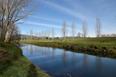 Ohinemuri River (bevanwalker) Tags: waikato nz trees autuum frosty morning beautiful quiet peaceful ducks eels trout cloud reflections landscape sereen grass fields