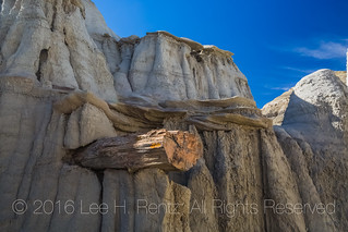 Petrified Log Eroding out of Softer Soil in the Bisti Badlands
