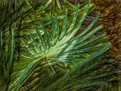 Leaves (Steve Taylor (Photography)) Tags: art digital brown green asia singapore plant texture flowerdome gardensbythebay leaves leaf