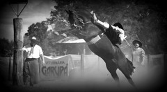 Eduardo Soares (Eduardo Amorim) Tags: gaúcho gaúchos gaucho gauchos cavalos caballos horses chevaux cavalli pferde caballo horse cheval cavallo pferd crioulo criollo crioulos criollos cavalocrioulo cavaloscrioulos caballocriollo caballoscriollos pampa campanha fronteira alegrete riograndedosul brésil brasil sudamérica südamerika suramérica américadosul southamerica amériquedusud americameridionale américadelsur americadelsud cavalo 馬 حصان 马 лошадь ঘোড়া 말 סוס ม้า häst hest hevonen άλογο brazil eduardoamorim jineteada gineteada