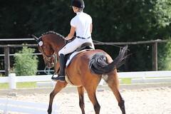 _MG_5751 (dreiwn) Tags: dressage dressurprüfung dressurreiten dressurpferd dressyr ridingarena reitturnier reiten reitverein reitsport ridingclub equestrian horse horseback horseriding horseshow pferdesport pferd pony pferde dressur dressuur tamronsp70200f28divcusd