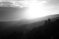 Goodnight (Jenny.Lawrence) Tags: landscape nature scenery muir woods muirwoods blackandwhite blackwhite silhouette sunset trees travel