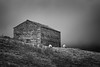 Cold (aveyardphotography) Tags: rural north yorkshire farm farming sheep animals old stone shepherds hut moody mono black white landscape nature two 2 grazing dark brooding shelter home grass hills hawes kirkby stephen dales cloudy weather cold