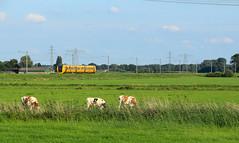NSR 3445 @ Zwolle (Sekdoorn) (Sicco Dierdorp) Tags: ns nsr reizigers buffel dm90 zwolle wierden almelo marslanden laagzuthem heino polder sekdoorn