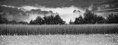 Summer evenings in The Dordogne. (TrevKerr) Tags: dordogne nikon d3s monochrome blackandwhite