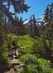 entering Spray Park (Dan Nevill) Tags: wonderland rainier wonderlandtrail mtrainier mountrainier nationalpark backpacking camping trail wilderness alex kieth hiking wildflowers washington pacificnorthwest pnw