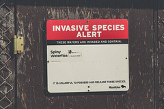Manitoba Invasive Species Alert (Tony Webster) Tags: birchpointprovincialpark canada lakeofthewoods manitoba boating invaded invasivespecies sign signage spinywaterflea warning waters buffalopoint ca typography