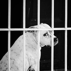 My Life as a Dog (toletoletole (www.levold.de/photosphere)) Tags: cuba fujixpro2 kuba xf56mmf12 sw trinidad bw porträt portrait hund gitter grid dog fui