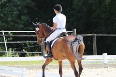 _MG_5710 (dreiwn) Tags: dressage dressurprüfung dressurreiten dressurpferd dressyr ridingarena reitturnier reiten reitverein reitsport ridingclub equestrian horse horseback horseriding horseshow pferdesport pferd pony pferde dressur dressuur tamronsp70200f28divcusd