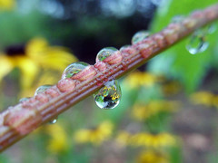 And Then Came The Rain (AleksandraMicic) Tags: photography photos photo images inspiration image nature priroda outdoor micicart micicartstudio macro aleksandramicic serbia slike slika flickr floral flower waterdrops wildlife drops raindrop raindrops droplet waterdrop green garden
