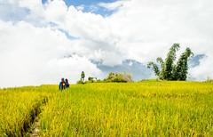 IMG_0637 (duong.bao) Tags: terrace field landscape terracefield vietnam laocai