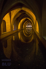 Real Alcazar de Sevilla (blulucio) Tags: blulucio spain espana andalucia andalusia sevilla siviglia alalcazar indoor interior travel color canon manual volta soffitto architettura
