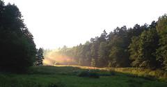 Morning Scene (09) (rimasjank) Tags: sunrise shadow meadow field lietuva