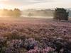 Here comes the sun (v-_-v) Tags: mehlingen rheinlandpfalz deutschland de fog heather sunrise morning trees goldenhour backlighting landscape flowers germany kaiserslautern summer explored