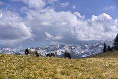 Poneys at the Wispile (Karl Le Gros) Tags: gstaad swissalps 2017 xaviervonerlach kantonbern switzerland berneroberland poneys clouds wispile