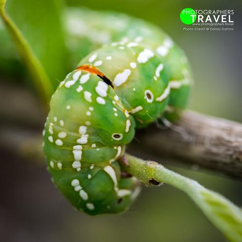 Caterpillar - Sabi Sabi 2010