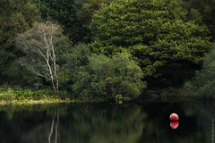 Red dot (MooziX) Tags: red buoy lake quarry dorothea wales snowdonia reflection water surface green contrast still tranquil trees nature birch silver shore calm spring