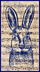 Le lapin étonné (MAPNANCY) Tags: lapin