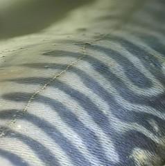 365 - Image 268 - Fish, Pisces (Focus stacked)... (Gary Neville) Tags: 365 365images photoaday 2017 panasonic panasonicfz1000 fz1000 focusstacking macro macromondays zodiac garyneville