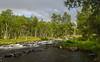 p7300239_36340211501_o (CanoeMassifCentral) Tags: canoeing femunden norway rogen sweden