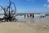 Botany Bay Beach - S.C. (DT's Photo Site - Anderson S.C.) Tags: canon 6d 24105mml lens botany bay edisto island charleston south carolina beach sea ocean driftwood deadwood trees waves surf coast combers southernlife atlantic coastline
