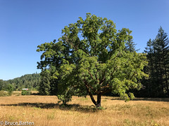 170821 Scotts Mills-09.jpg (Bruce Batten) Tags: subjects trees usa plants oregon trips occasions locations woodburn unitedstates us buildings shadows