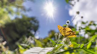 A sunny encounter...