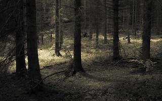Eifel Forest
