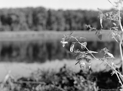 img334-4.jpg (Stephen Malagodi) Tags: film lowell flower pond