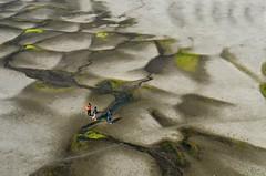Travellers! (ashik mahmud 1847) Tags: bangladesh nikkor d5100 people aerial pattern texture ngc