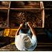 Brazil nut processing