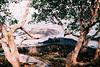 F1010026_lr (chi.ilpleut) Tags: singapore outing dailylife 2017 jubilee film ilovefilms kodakelitechrome100 kodakfilm expiredfilm grain analogue memory 漫步 過期底片 柯達 藍 蒐集記憶 照片使記憶復甦 銀鹽記憶 敘述 新加坡 ubin island green nature ilovegreen beachwalk cycling breathe takeabreak 烏敏島
