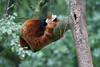Rhenen - Ouwehands Zoo 2017-8497 (Quistnix!) Tags: 2017 ouwehandszoo dierenpark zoo
