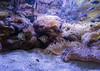 001136-P2180198 (aussiephil1960) Tags: sydneyaquarium em1mark1 samyang75mm fisheye