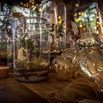 Utopian (Bonsai) in a bowl thumbnail