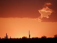 heavenly portal (jeffies.stuff) Tags: arizona sky sunset orange cactus scenic landscape clouds brush horizon jeffsmith