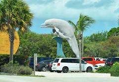 USA Trip 2017 (jaffa600) Tags: unitedstatesofamerica unitedstates usa america stateofflorida florida miami cityofmiami floridakeys thekeys keywest keylargo dolphin