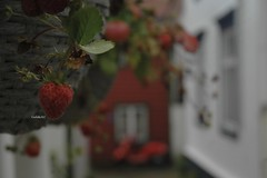 gUuo+uyzTAeuGOu7PNbB1Q_thumb_a98b (carlottak.c.) Tags: strawberry fragole fragola fruit norway norvegia street
