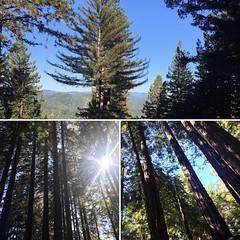 Santa Cruz (debstah1) Tags: california norcal travel redwoods santacruz