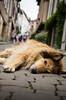 IMGP0793 (fLobOOk) Tags: cordes sur ciel cordessurciel aveyron tarn village médiéval histoire chien chat france europe garonne tarnetgaronne